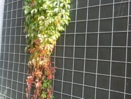 panel vegetal